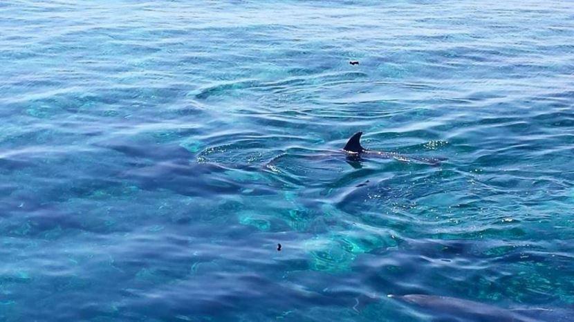 Schwimmen mit den Delfinen ab safaga Hafen