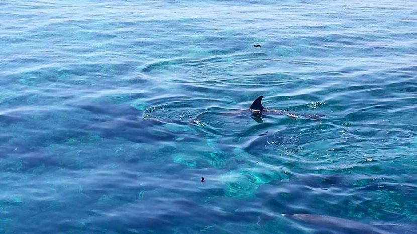 Schnorcheln und schwimmen mit Delfinen ab Soma Bay,Safaga.