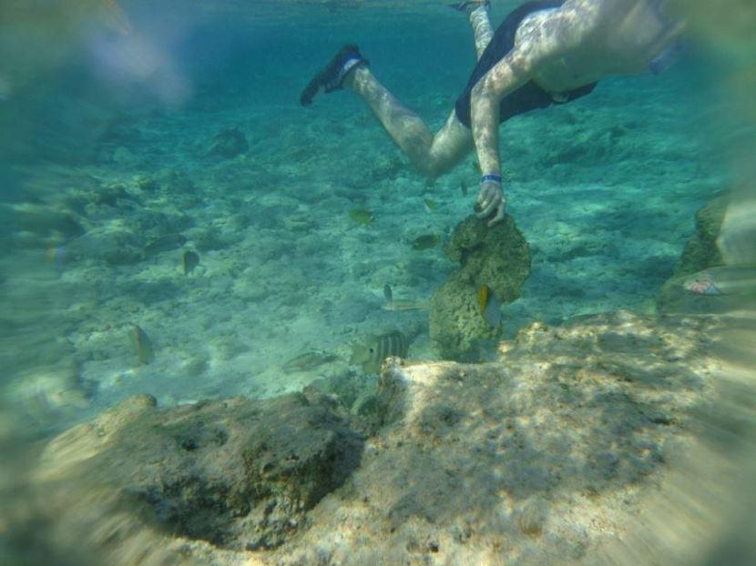 Schnorchelausflug zur Insel Giftun ab El Gouna