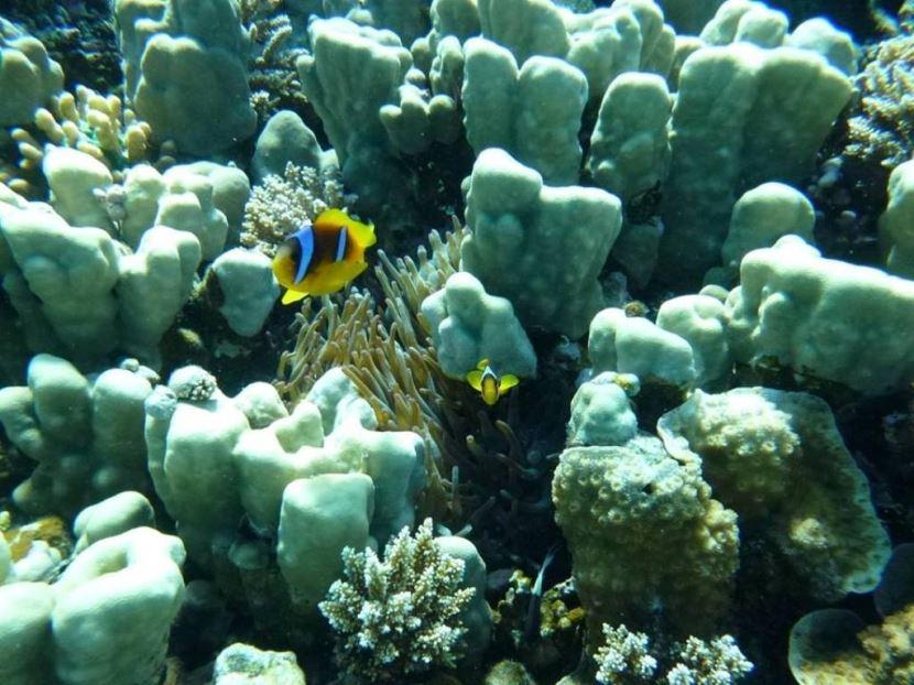 Ausflug zum Sindbad U-Boot in Hurghada